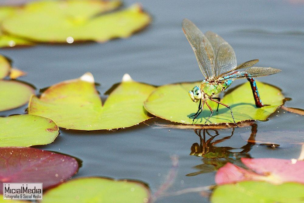 2012-4-Libelle-im-Schlossgarten